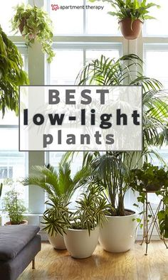 8 Houseplants that Can Survive Urban Apartments, Low Light and Under-Watering | choosing the right plant for your plant-care style and your specific home are two of the most important factors for keeping a houseplant alive. Based on the conditions of your home, along with your aesthetic preferences, you can find your best match. #waterplantshouseplant