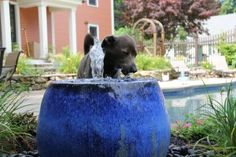 Water feature for the dogs! Backyard deck