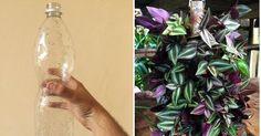 No os perdáis este sencillo y práctico tutorial que, de la mano de NATURALEZA TROPICAL, nos enseñará a crear un jardín vertical tremendamente coqueto y utilizando tan solo una botella de plástico. ¡Reciclaje creativo! Container Gardening, Gardening Tips, Plant Care, Glass Vase, Cactus, Patio, Tan Solo, Gardens, String Garden