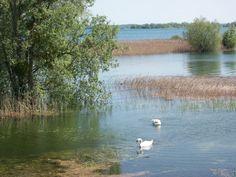 lac du Der au printemps