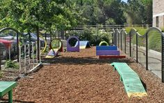 playground for our dogs. my babies would love this for sure!