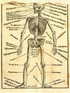 Artist: Hans Wechtlin, Title: Feldbuch der Wundartzney, Page: 231, Date: 1528