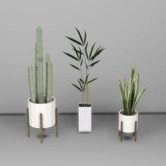 Plants – Leosims.com