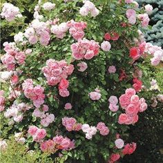 Garden Decor - Outdoor & Patio Decorations | Collections Etc. Queen Elizabeth Rose, Outdoor Garden Decor, Rose Wall, Collections Etc, Lawn Ornaments, Mini Roses, Blooming Rose, Pink Blossom, Climbing Roses