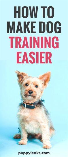 Dog Training Dc Dog Training Videos Free Cesar Millan Dog