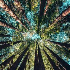So Happy, Cosmos, Tree Day, Survival, Circular Economy, Tree Canvas, Tree Wall Art, Gold Coast, Trees To Plant