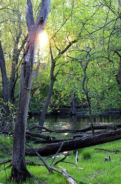 Setting Sun on Nature Preserve
