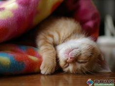 Smiley sleeping kitten