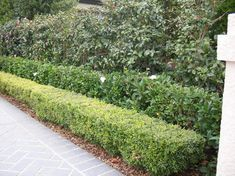 Layering hedges in a garden