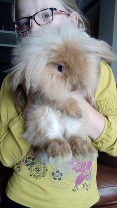 декоративные кролики Вислоухие Бараны - 4