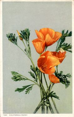 California - Poppy
