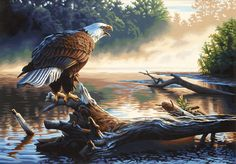 Eagle Hunter Paint by Number Kit by Paintworks Dimensions