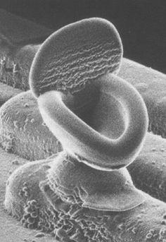 electron microscope toilet