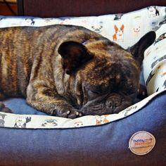 """""""Para o bem-estar físico e mental dos cães eles precisam dormir de 14 a 18 horas por dia"""" - quem afirma isso é o comportamentalista português Patrick Rocha e nós não poderíamos concordar mais!  A qualidade do sono afeta diretamente as funções intelectuais regulando as forças mentais durante o dia armazenando o conhecimento e as experiências valiosas enquanto o indivíduo dorme.  Isso tudo significa que quanto maior a qualidade do sono melhor o processo de aprendizagem dos cães - e isso inclui…"""