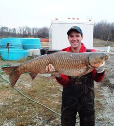 Asian carp reproduce in Great Lakes watershed