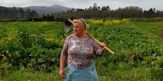 "A potato farmer has become an internet celebrity and renamed ""Señora Trump"" after a photo of her went viral on social media. Donald Trump, Spanish Potatoes, Kids Laughing, Political Satire, Bangla News, Look Alike, Just For Fun, Farmer, Social Media"