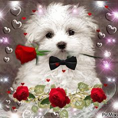 How gorgeous! Thank you my dear Sis, Janette. Beautiful Scenery Pictures, Beautiful Gif, Love Images, Beautiful Roses, Photo Zen, Photo D Art, Mickey Mouse Images, Flowers Gif, Pretty Flowers