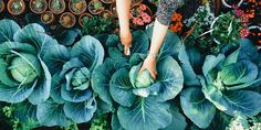 Why gardening therapy is the new health trend we should all be enjoying  - countryliving.co.uk