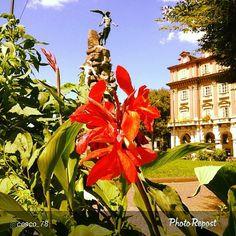 #Torino raccontata dai cittadini per #InTO Foto di @cesco_78 #torino il genio umano #ig_Turin_ #igerstorino #flowers #sun