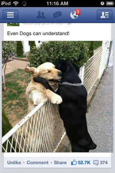 Check out these cute puppies in this compilation of funny puppy videos. Puppies are the cutest. Pug puppies, bulldog puppies, labrador puppies, and more, they Funny Animal Quotes, Animal Jokes, Funny Animal Pictures, Cute Funny Animals, Funny Quotes, Animal Hugs, Hilarious Pictures, Pictures Images, Pizza Pictures