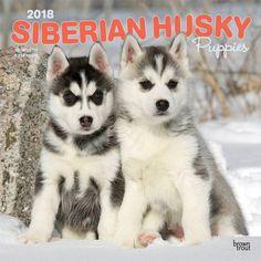 BrownTrout Hunde Kalender 2018Browntrout Hunde Wandkalender 2018: Siberian Husky Welpen