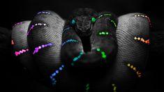 Resultado de imagen de serpiente de que color es