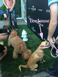 Ariana Grande's dog, Touslouse at the Coach brunch.