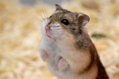 """""""O GRITO DO BICHO"""": Rapaz arranca cabeça de hamster com a boca nos Est..."""