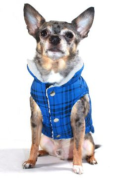 Back VIew of Hip Doggie Blue Plaid Shearling Puffer Vest Accented with Authentic Embroidered HD Emblem Logo on Lower  Back Shoulder. Shown on Dog