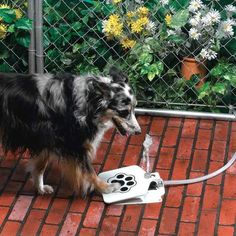 The dog water fountain turns drinking water into a game.