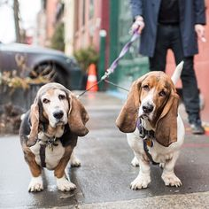 Joni & Jerry, Basset Hounds (10 & 8 y/o), 11th & Greenwich St, New York, NY