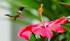 26 Pretty Hibiscus Flower