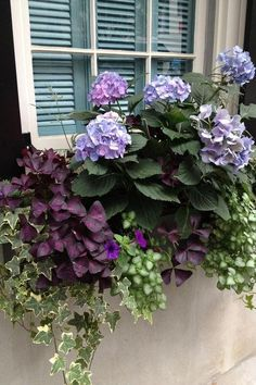 Window Box Style - 29 Ways to Grow Hydrangeas in Containers - Southernliving. Hydrangeas make pretty, ethereal additions to home window boxes. Pair purple hues with shades of emerald green for a box that's as eye-catching as it is easy to care for. See the Pin