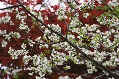 Spring at Furman University