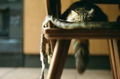 The Murmuring Cottage: Archive Crazy Cat Lady, Crazy Cats, Big Cats, Cats And Kittens, Cute Cats, Neko, Ninja Cats, Irish Cottage, Sleepy Cat
