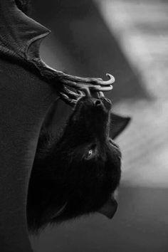 serious bat