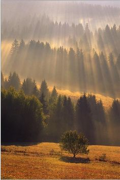 have always loved filtered sun rays. This spectacular photograph by Tomáš Záhumenský is called 'Awakening'