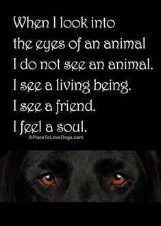 When I look into the eyes of an animal I do not see an animal. I see a living being. I see a friend. I see a soul | Pet dog owner quote