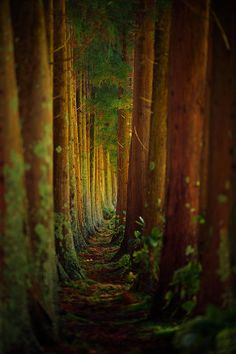 Forest Photograph by Rui Caria