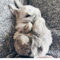 This baby rabbit is something #BabyAnimals #Cute #Nice