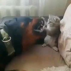 Cute Funny Animals, Cute Baby Animals, Funny Dogs, Cute Cats, Zoo Animals, Funny Memes, Videos Funny, Cute Animal Videos, Funny Animal Pictures