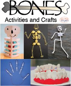 Skeletal system activity ideas for your human body unit from the Our Time to Lea. Science Crafts, Science Student, Preschool Science, Science For Kids, Science Projects, Preschool Activities, Preschool Kindergarten, Science Education, Preschool Education