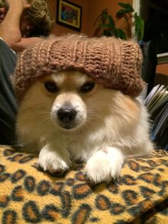 So you're having a rough day, or week, and you're feeling a lot like a grumpy dog in a dumb knitted hat. | 36 Happy Dogs For The Sad People Out There