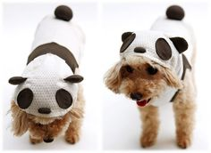 panda costume for your dog!