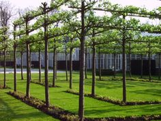 Espalier is art of pruning and training trees or shrubs usually against a wall or trellis to form symmetrical and flat geometric shapes.  Training trees into flat, two-dimensional shapes has more value than just decoration of walls and gardens. Espaliered trees are perfect for lawn and gardens with limited space. When grown against walls, they reflect sunlight and protect the wall from heat waves.