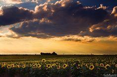 A Summer Evening Serenade by John De Bord Photography on 500px
