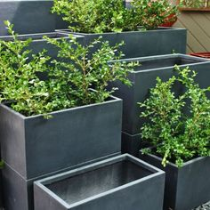 Light and easy to manouevre, these planters and troughs made from fibreglass are modern, clean and contemporary. Perfect for courtyards, balconies and decks. Makes a great herb garden near the kitchen or use several in a row planted with English Box for a great privacy hedge.