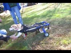 The Walkin' Wheels Dog Wheelchair for Small Handicapped Dogs