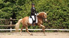 Ein sonniges Wochenende für unsere Ponies. Jonas Frick und Zitnas Nadino konnten im Gegensatz zu let