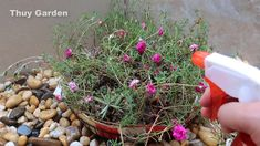 hanging flower basket ideas, Beautiful flower pot ideas, gardenideas Hanging Flower Baskets, Bonsai Art, Basket Ideas, Diy Organization, Flower Pots, Beautiful Flowers, Recycling, Make It Yourself, Creative